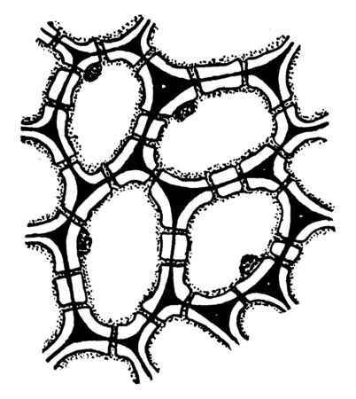 This picture showing stone cells. It is start to growing. It is second step, vintage line drawing or engraving illustration.