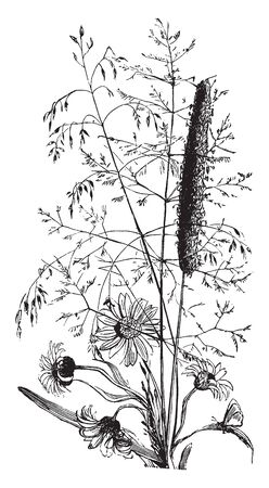 The showing picture of flowering plant. Upper flower is tubular and spreading and lower flowers are simple rounded, vintage line drawing or engraving illustration. Ilustrace