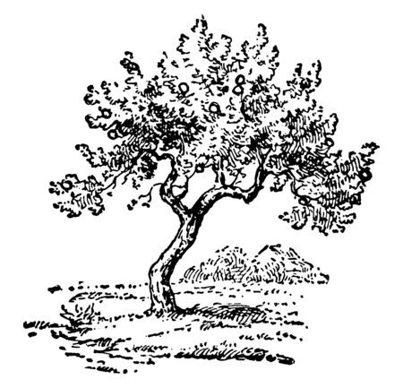 In this frame there is a tree that is completely dry. That plant is not well planted, vintage line drawing or engraving illustration.