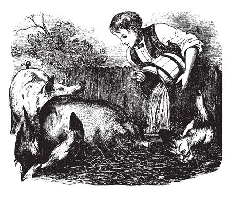 A boy feeding pigs, vintage line drawing or engraving illustration