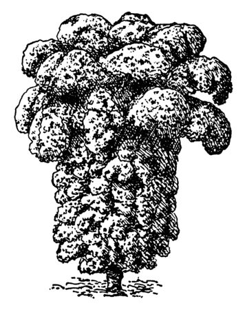 This picture showing a kale. It is a type of vegetable. Leaves are thick and long. Bunch of leaves, the leaves are very dense, vintage line drawing or engraving illustration.