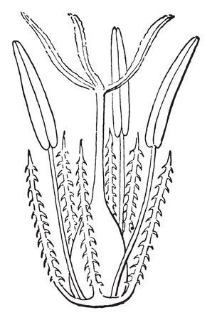 A picture showing the deaf sight of a big flower, vintage line drawing or engraving illustration. Иллюстрация