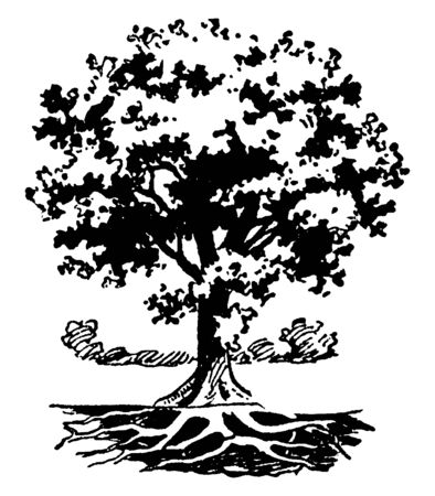 In this frame there is a tree that is very nice and it is full of leaf. The roots of that tree are visible in the roots below, vintage line drawing or engraving illustration.