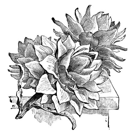 It's flower of Artichoke plant. The mass of immature florets in the center of the bud is called the