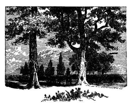 A man wearing a hat is standing between two pecan trees with his dog, vintage line drawing or engraving illustration.