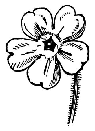 It is the flower of the Primrose plant. There are 5 petals on the flower and the petals are heart-shaped, vintage line drawing or engraving illustration.