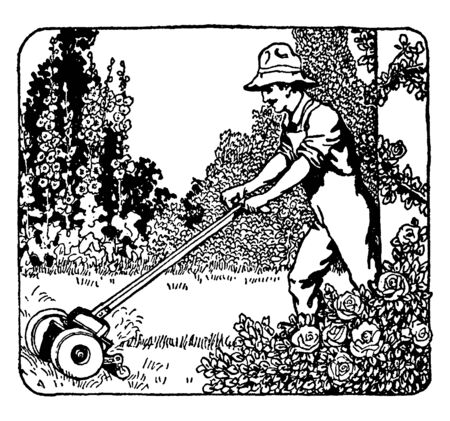 A man mowing lawn in the garden, vintage line drawing or engraving illustration