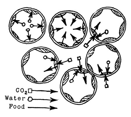 Six chloroplasts are there, they observe more light and co2 during photosynthesized. Uses additional water to prevent damage to the cell, vintage line drawing or engraving illustration.