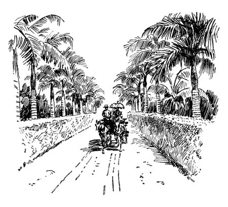 A Road in Honolulu where a drawing of a road in Honolulu in the early 1900, vintage line drawing or engraving illustration. Illustration
