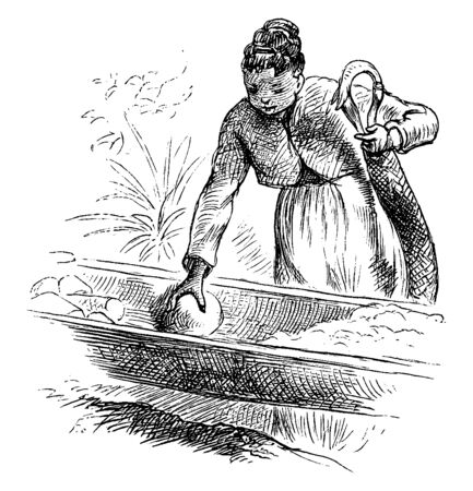 A woman filling a plaited cylinder used to squeeze the prussic acid from the grated cassava pulp, vintage line drawing or engraving illustration