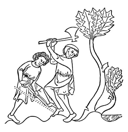 Two men chopping tree with an axe, vintage line drawing or engraving illustration