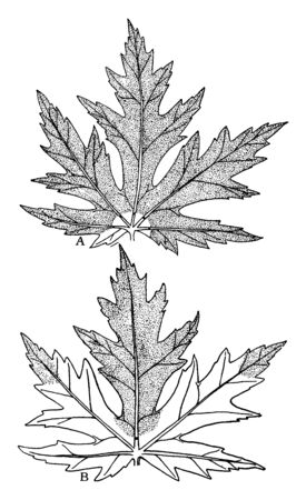 These veins help to provide leaf structure, leaf patterns as complex as a spider web or a straight line, vintage line drawing or engraving illustration.