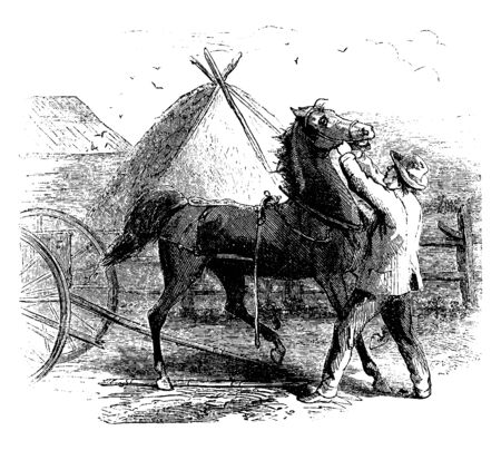A man putting bridle on a horse, tent in background, vintage line drawing or engraving illustration