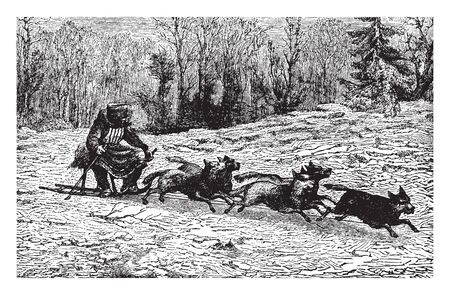 Siberian Dog Sledge used by the Siberians for travel, vintage line drawing or engraving illustration.