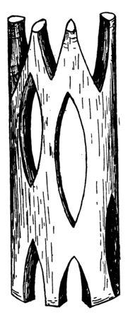 A vascular bundle is a part of the transport system in vascular plants, vintage line drawing or engraving illustration.