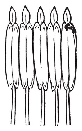 A picture showing five syngenesic stamens of a Coreopsis, with the tube open and exposed, vintage line drawing or engraving illustration. Ilustração