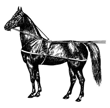 Original Use Horse Harness is a type of horse tack that allows a horse or other equine to pull various horse drawn vehicles such as a carriage, vintage line drawing or engraving illustration.