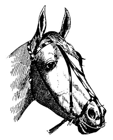 Driving Bit for Harness use a nose band that is designed to exert pressure on sensitive areas of the animal face in order to provide direction and control, vintage line drawing or engraving illustration. Ilustração