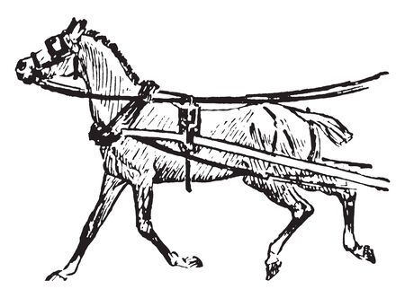 Horse is one of two extant subspecies of Equus ferus, vintage line drawing or engraving illustration.