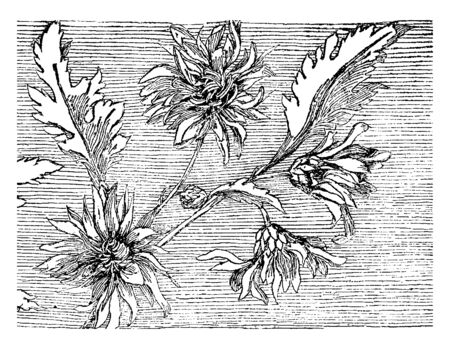 In the picture, decorative flowers are shown, these flowers are decorated in many programs, vintage line drawing or engraving illustration.