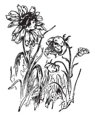 A picture is showing Daisies. This is a flower of daisies with womens faces, vintage line drawing or engraving illustration.