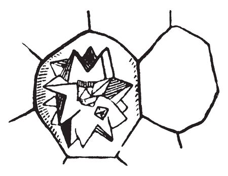 A picture showing Glimear crystal in a cell, from beet root, vintage line drawing or engraving illustration.