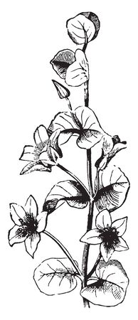 A picture is showing Axillary Flower. Axillary flowers are appeared scattered on the stem, vintage line drawing or engraving illustration.