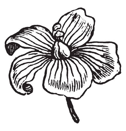 A picture is showing Flax, it also known as Linseed. It belongs to Linaceae family. This is an ornamental plant. Flax fibers are used to make linen. Flowers are pure pale blue with five petals, vintage line drawing or engraving illustration.