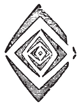 Picture shows the transverse section of a bud in which leaves are cut in diamond shape, vintage line drawing or engraving illustration.