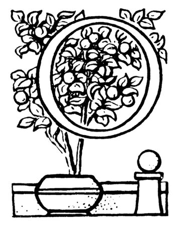 A decorative letter O with potted plant, vintage line drawing or engraving illustration