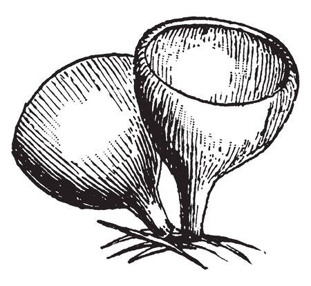 A picture showing small cup shaped depression, vintage line drawing or engraving illustration. Ilustracja