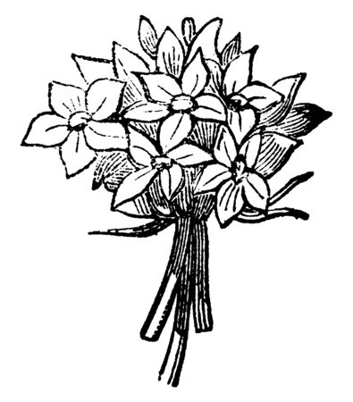 A small cluster of flowers are grouped together to form a single flower-like structure. A dense cluster of short flowers that together look like part of a single flower, vintage line drawing or engraving illustration.