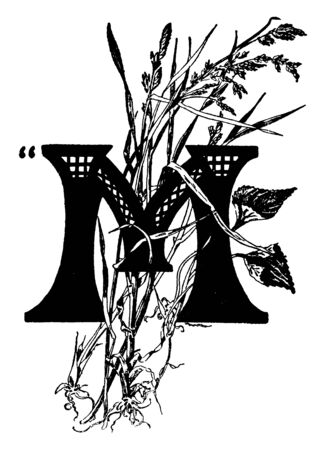 An ornamental capital letter M with various wild grasses, vintage line drawing or engraving illustration
