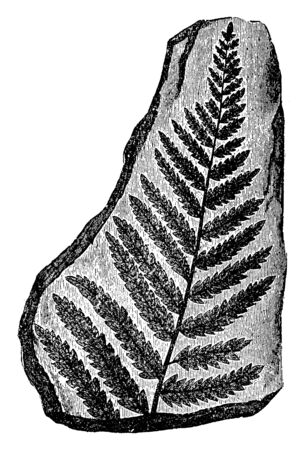 In this picture, the picture of the leaf is carved on stone, vintage line drawing or engraving illustration. Ilustrace