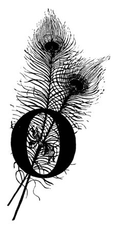 A decorative capital letter O with two peacock feathers, vintage line drawing or engraving illustration Ilustracja