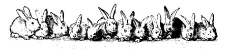This picture is showing twelve rabbits sitting in a line on the ground, vintage line drawing or engraving illustration. Ilustração