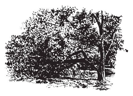 There is a tree in this frame that has been covered by the whole leaf. And a branch of that tree is broken, vintage line drawing or engraving illustration.