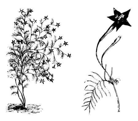 The picture shows the Habit and Detached Flowering Branchlet of Ipomoea Quamoclit Plant. It has dark red, star-like, long funnel shaped flower and leaves are thin long threads like fibers, vintage line drawing or engraving illustration.