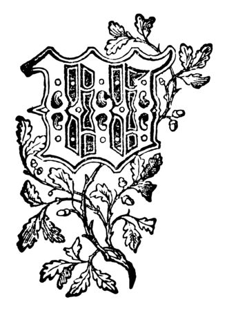 Decorative Floral W used at the start of a new chapter or heading, vintage line drawing or engraving illustration. Çizim