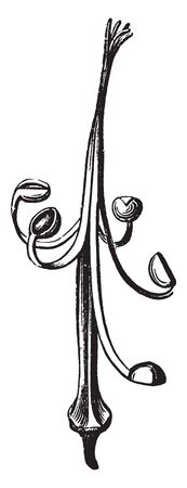This picture is showing a pistil. It is a thin and long. The anther grows, vintage line drawing or engraving illustration.