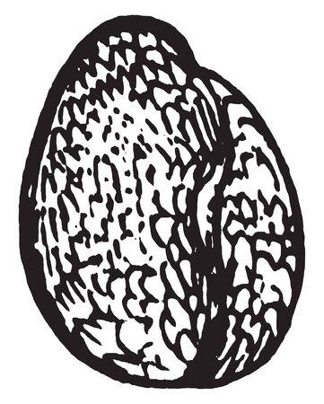 Es ist der Samen von Wild Geranium, einer krautigen Pflanze oder einem kleinen Strauch einer Gattung, die die Storchschnabel umfasst. Geranien tragen eine lange, schmale Frucht, die wie ein Kranich, eine Vintage-Linienzeichnung oder eine Gravierillustration geformt sein soll.
