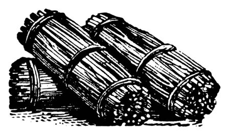 Fascine is bundle of rods or small sticks of wood bound at both ends and in the middle, vintage line drawing or engraving illustration. 向量圖像