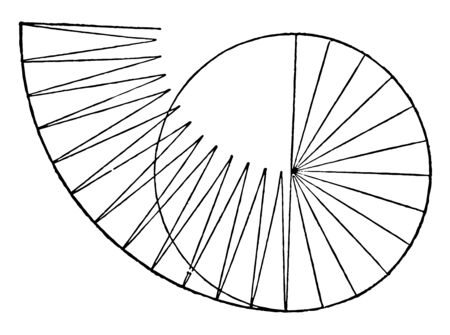 An image showing the circle formed by triangles whose bases form the circumference, and whose altitude is the radius (1/2 diameter) of the circle, vintage line drawing or engraving illustration. Фото со стока - 132955142