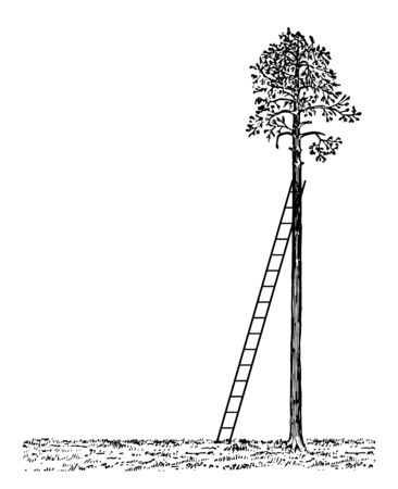 Stairs image bend on the edge of a palm tree, because the triangle appears, vintage line drawing or engraving illustration.