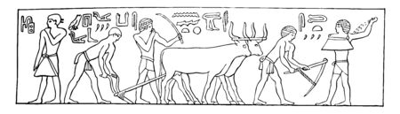 An illustration of Egyptians plowing and sowing with Hieroglyphs written above, vintage line drawing or engraving illustration. Ilustração