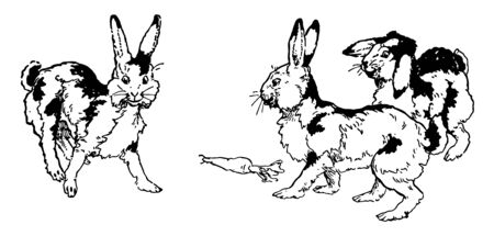 This picture is showing three rabbits delighted by looking at the carrot on the ground, vintage line drawing or engraving illustration. Ilustração