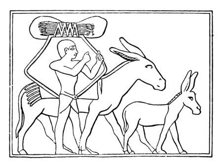 Egyptian used donkeys for transportation, vintage line drawing or engraving illustration.