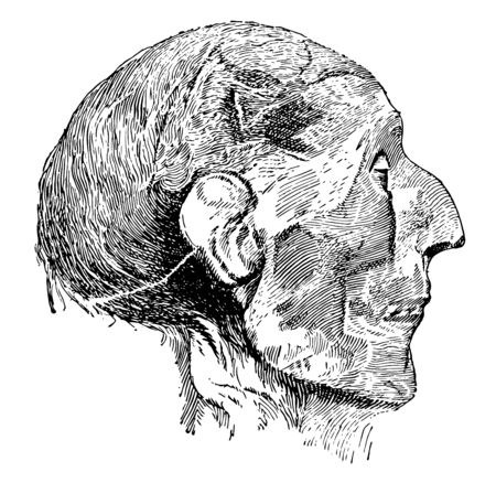 Head of Mummy of Ramses II was preserved in the Egyptian Museum in Cairo, vintage line drawing or engraving illustration.