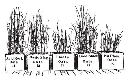 In these frames there are different kinds of saplings of oats in a planter and they have their names on the planter, vintage line drawing or engraving illustration.