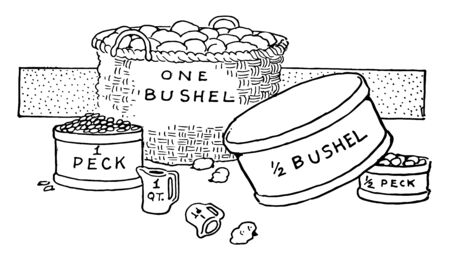 Picture showing the different type of bushel measurement. It is showing comparison between one bushel, half bushel, one peck and half peck, vintage line drawing or engraving illustration.